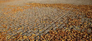 paved ground with autumn leaves