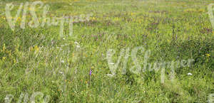 wildflowers and grasses on a meadow