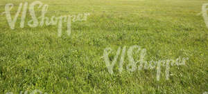 field of wild grass