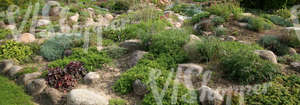 sloped garden ground with rocks and plants