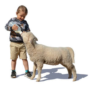 little boy feeding a lamb