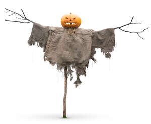 cut out halloween scarecrow in daylight