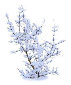 cut out bare bush covered with snow