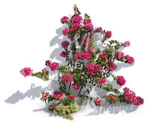 cut out climbing plant with pink blossoms