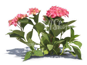 cut out small plant with pink blossoms