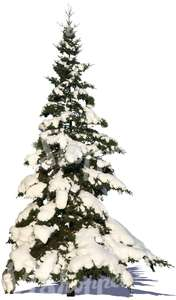 cut out snowy fir
