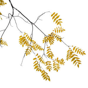 cut out branch with yellow leaves