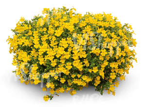 cut out large flower bush with yellow blossoms