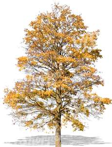 cut out tree with yellow autumn leaves