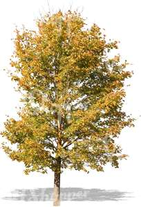cut out tree with  golden leaves