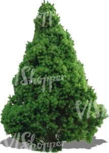 cut out small evergreen tree