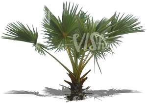 cut out small palm