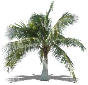 free cut out palm tree