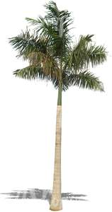 cut out big palm