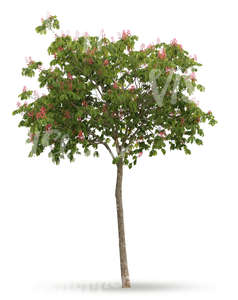 cut out small tree with pink blossoms