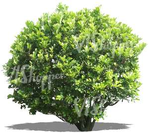 cut out big round bush