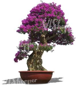 cut out blooming bonzai tree in a pot