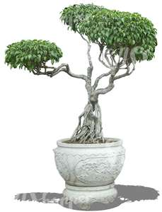 cut out asian tree in a decorative pot