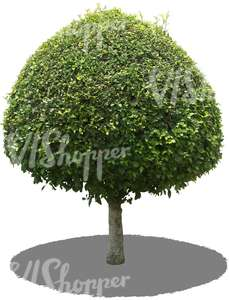 cut out round tropical tree