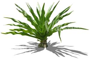 cut out small tropical plant