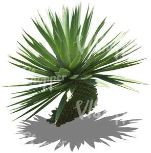 cut out tropical small plant