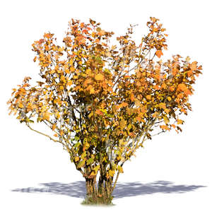 cut out bush with yellow autumn leaves