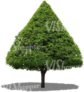 cut out conical tree