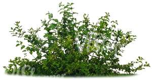 cut out small bush