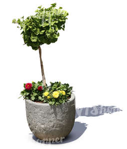small plant and flowers in a stone pot