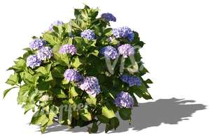 cut out small plant with blue blossoms