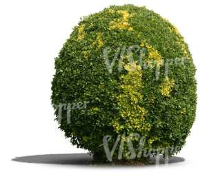 cut out round bush