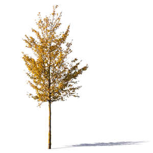 small cut out tree with yellow leaves