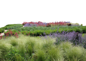 cut out foreground with grass and flowers