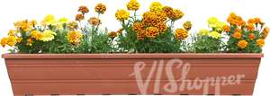 yellow flowers in a balcony basket