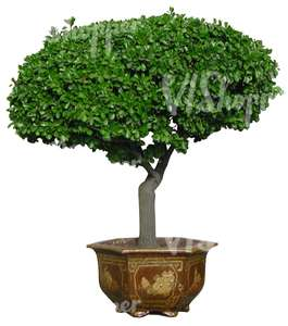 small tree in a metallic pot