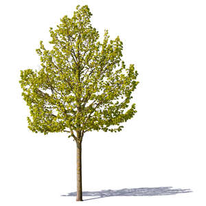 cut out small trees with spring leaves