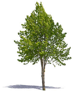 cut out medium size tree