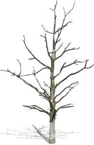cut out small leafless tree