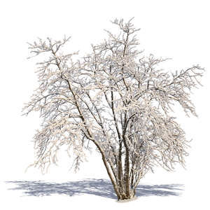 cut out tree covered with snow