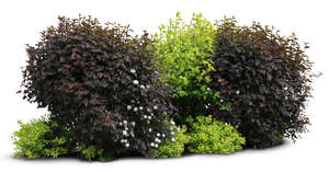 cut out group of bushes