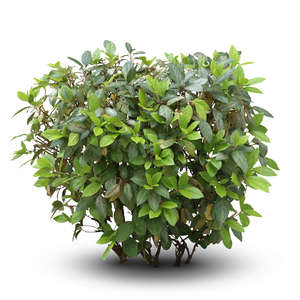 cut out small thick bush