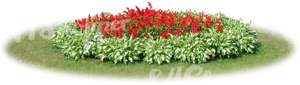 round flowerbed with red flowers