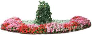 large flowerbed with red flowers