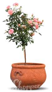 cut out rose tree in a pot