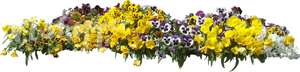 cut out bed of yellow pansies