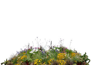 cut out foreground flowerbed