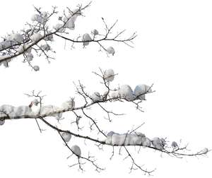 cut out branch covered with snow