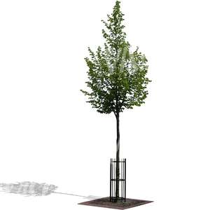 small tree with a support frame