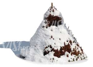 decorative fir covered with snow