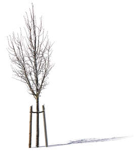 small winter tree with support crate